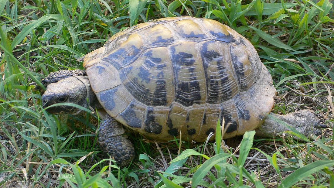 roseto sequestrate 24 tartarughe protette il martino