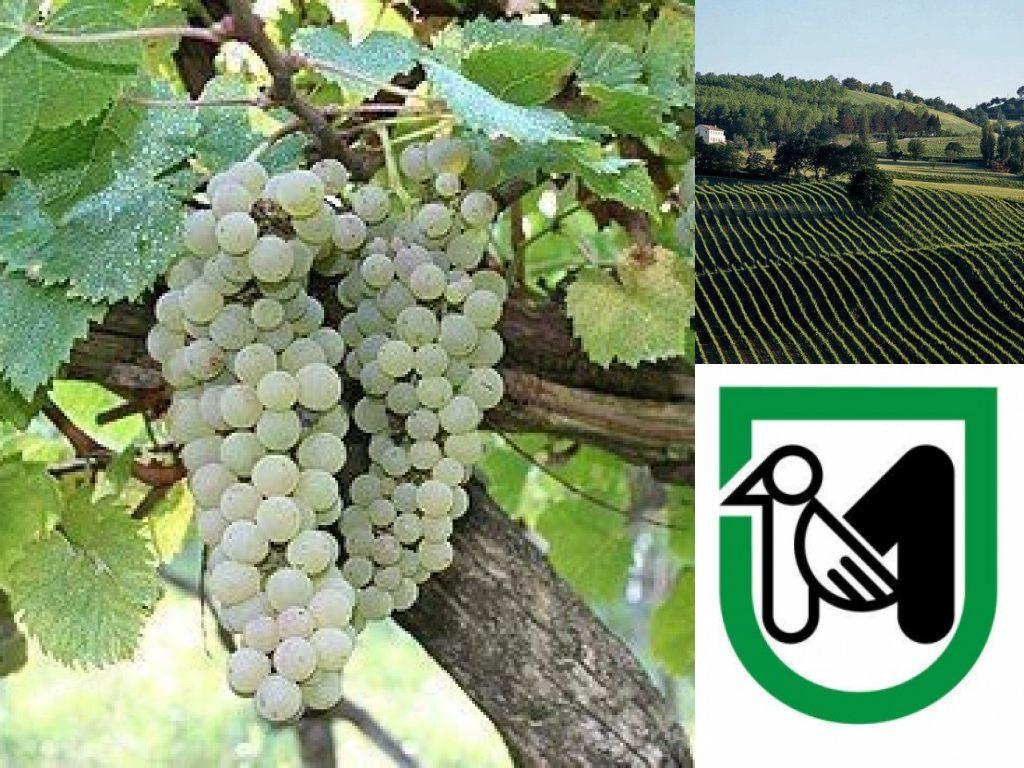 Immagine: Logo della Regione Marche: vigneto pecorino (Il Martino - ilmartino.it -)