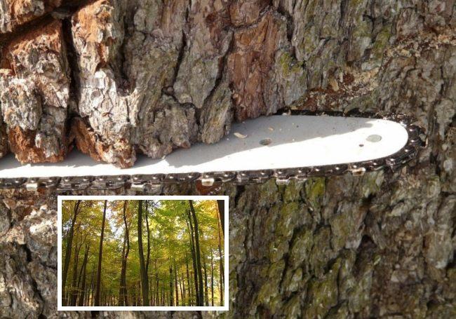 Taglio bosco (Il Martino - ilmartino.it -)