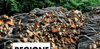 Regione Marche, legname. Energia da biomasse (Il Martino - ilmartino.it -)