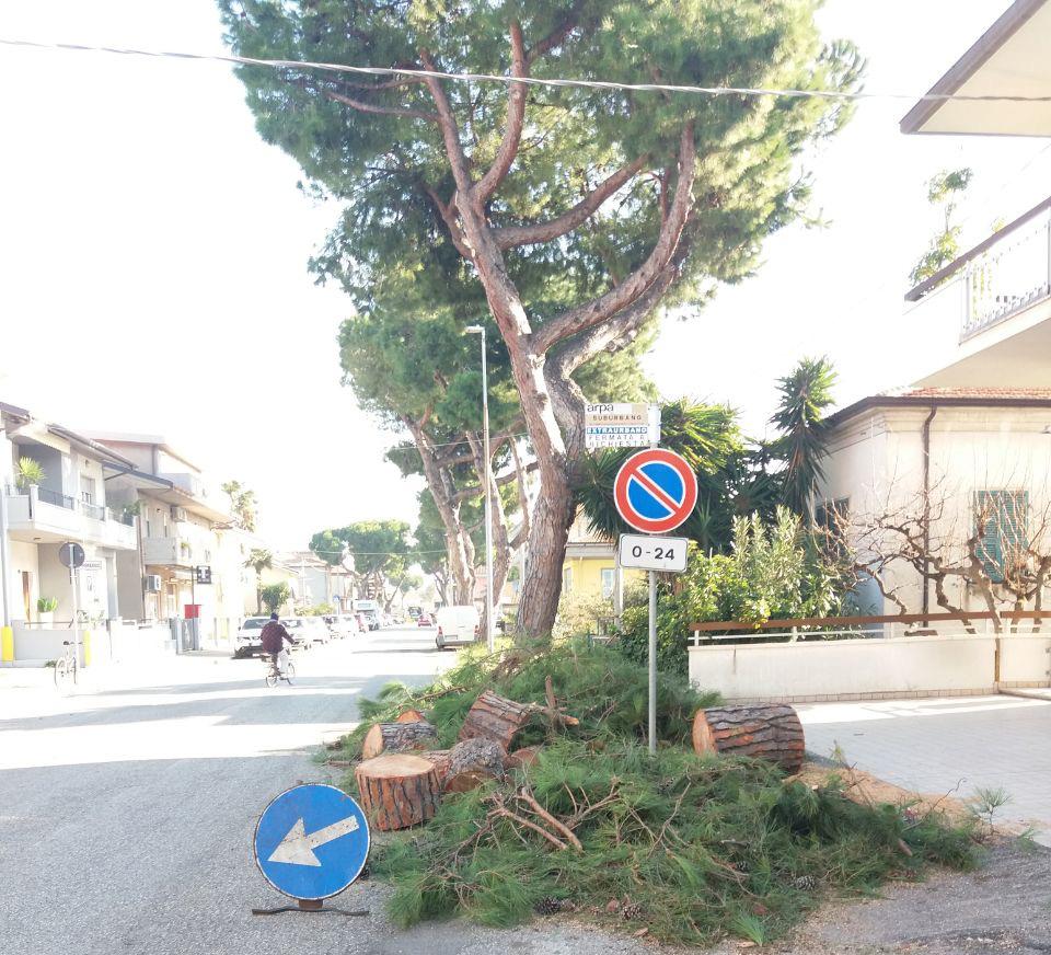 taglio dei pini in via Roma